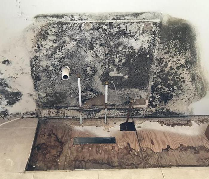 Mold Remediation in Alexandria Home Before